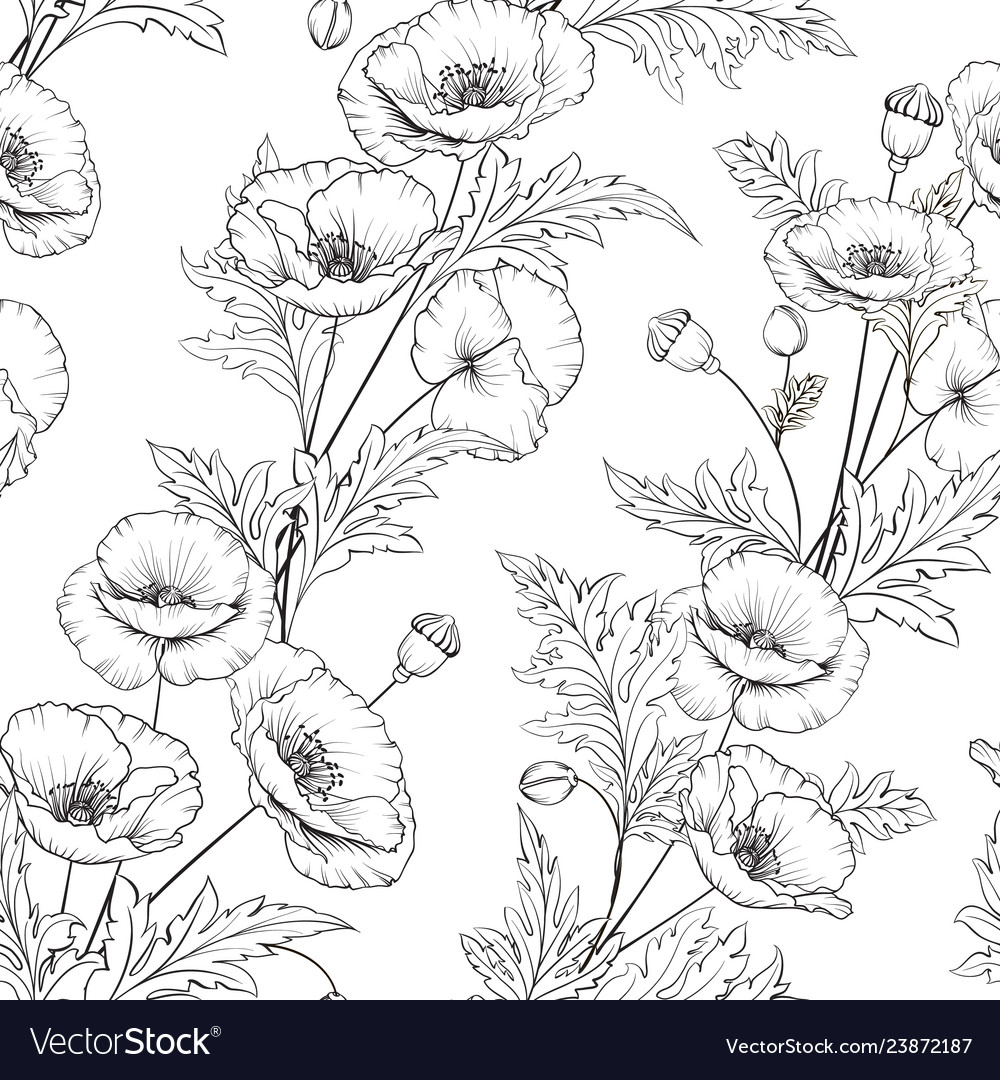 Pattern poppy flowers on a white background