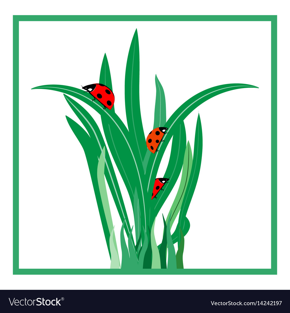 Ladybug on grass in square card
