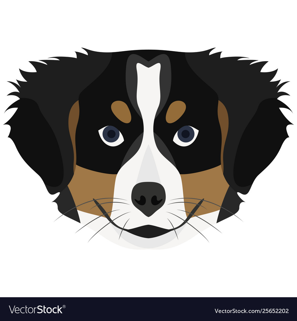 Dog Bernese Mountain Dog