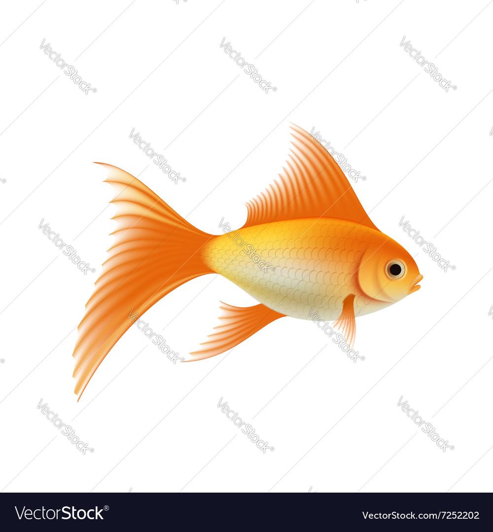 Gold Aquarium Fish Royalty Free Vector Image Vectorstock