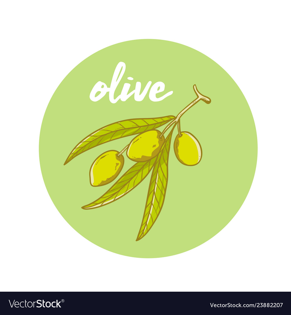 Hand drawn olive oil