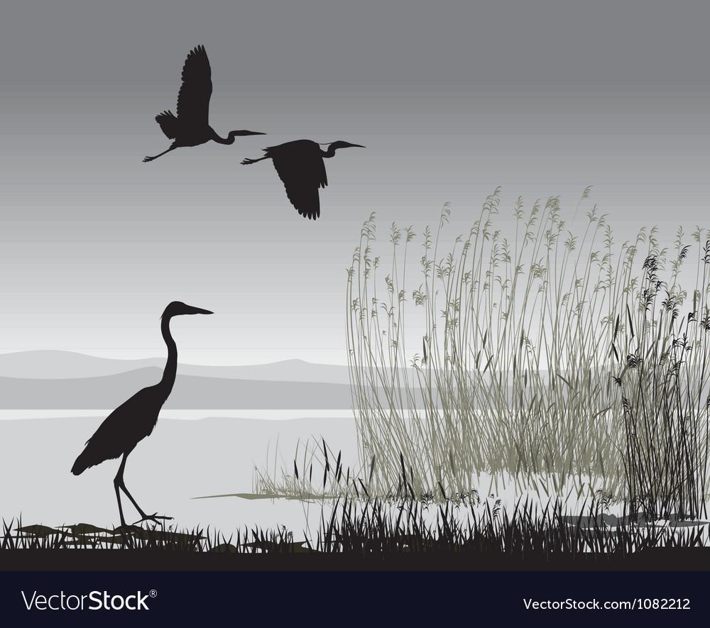 Herons vector image