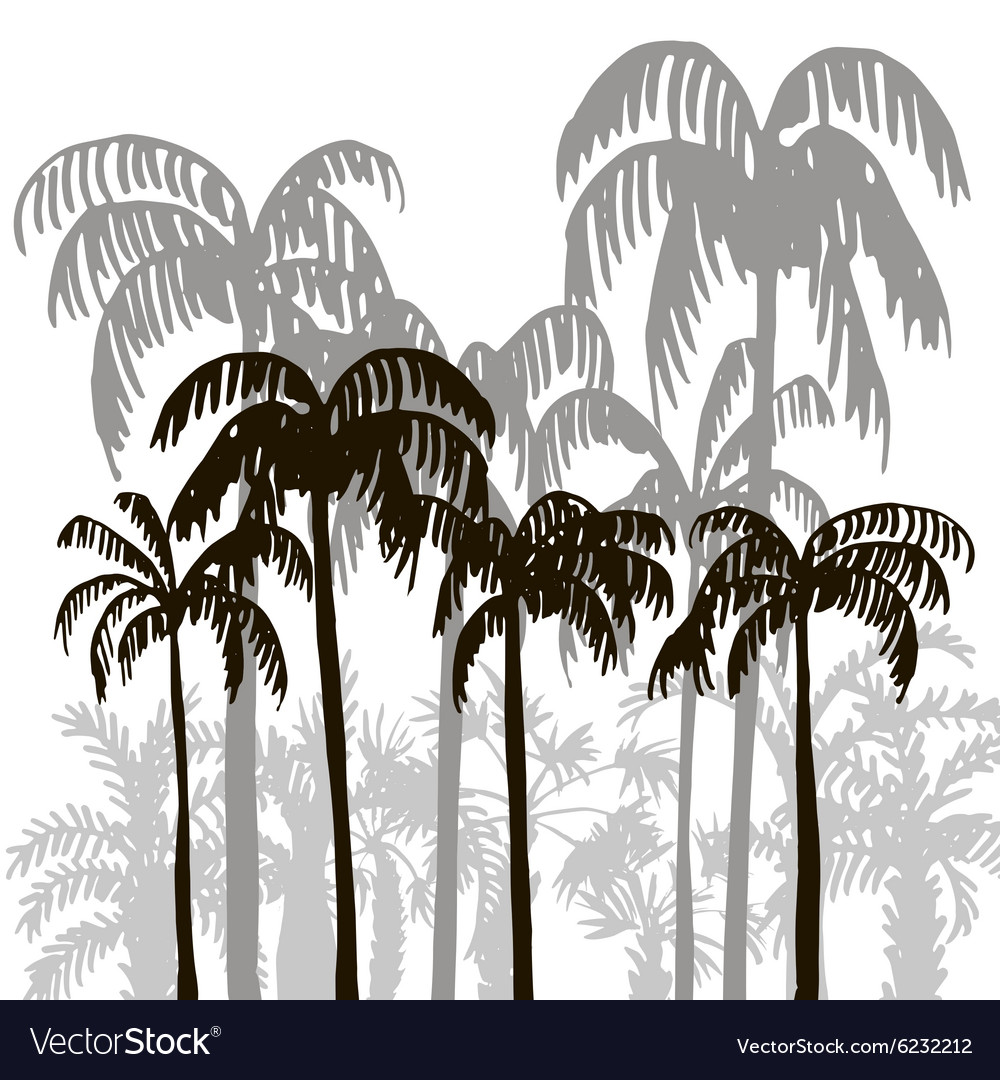 Rain forest palm tree silhouettes