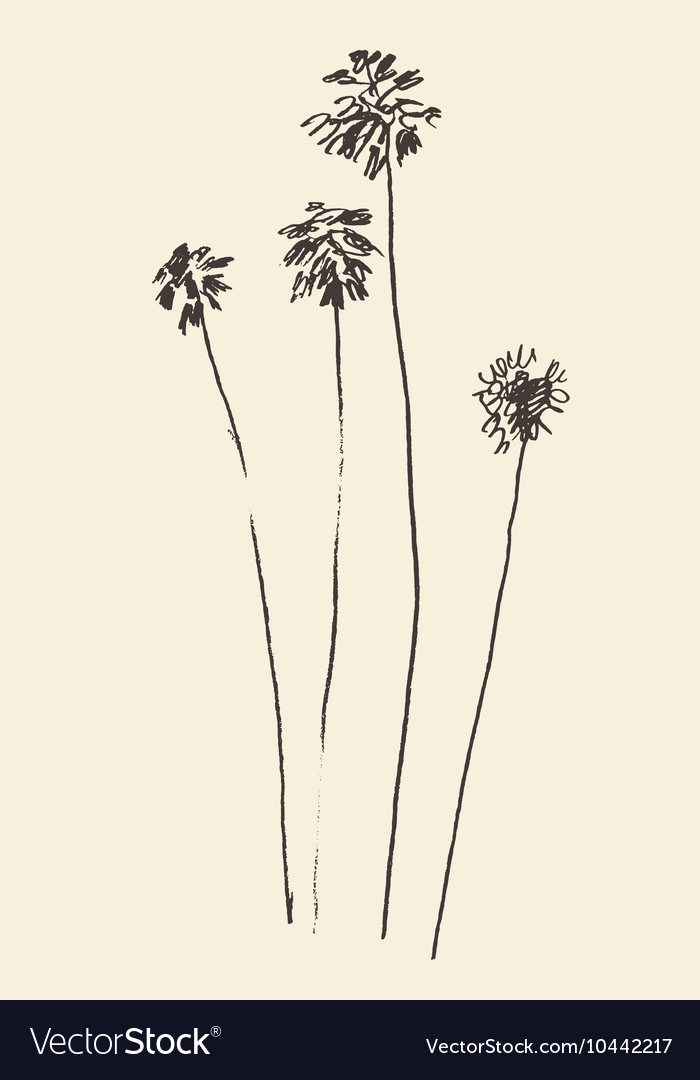 Silhouette of palm trees drawn sketch