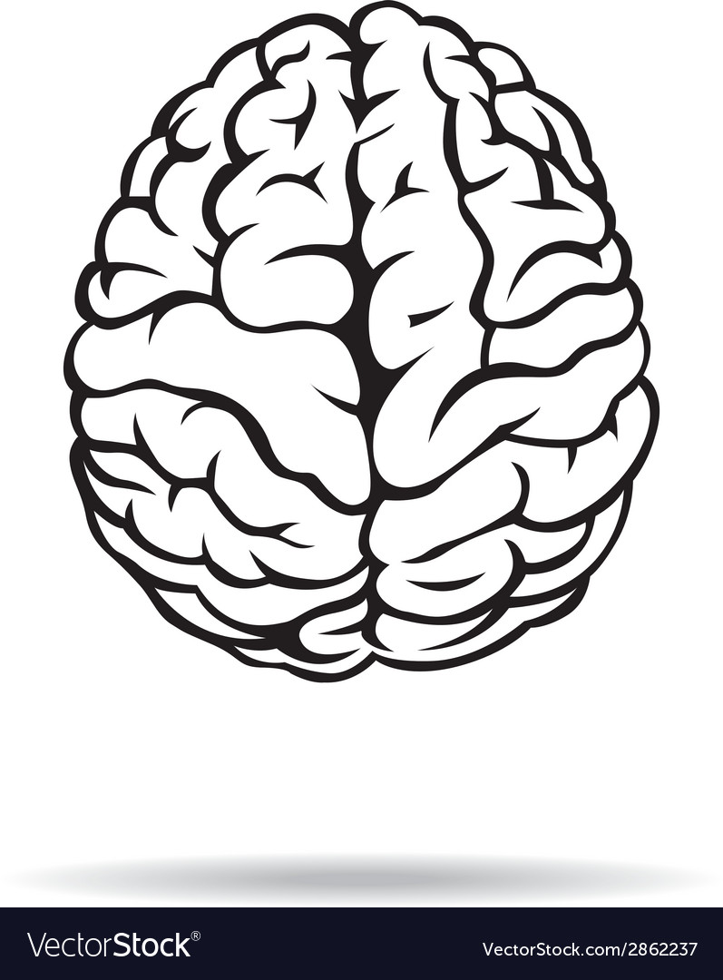 Brain icon On the white background