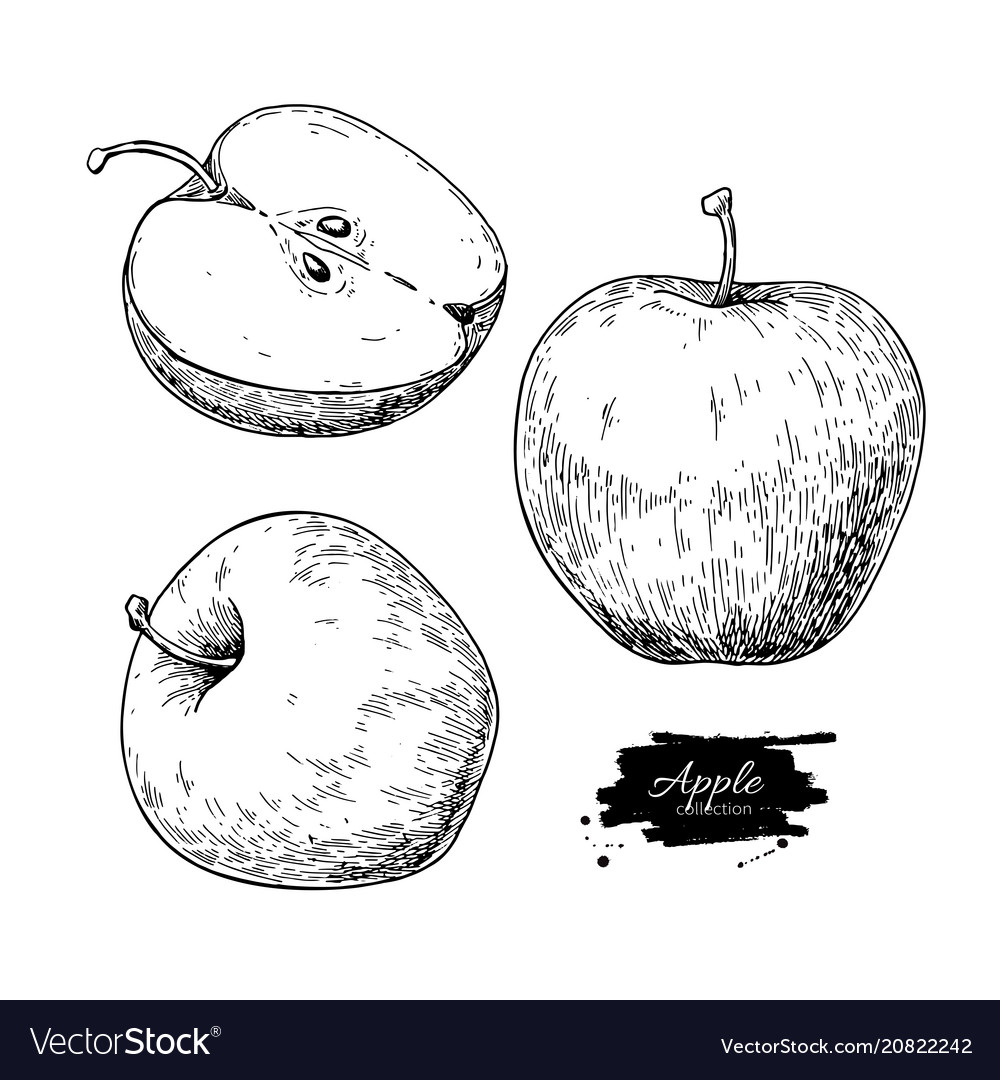 Apple drawing hand drawn fruit and sliced