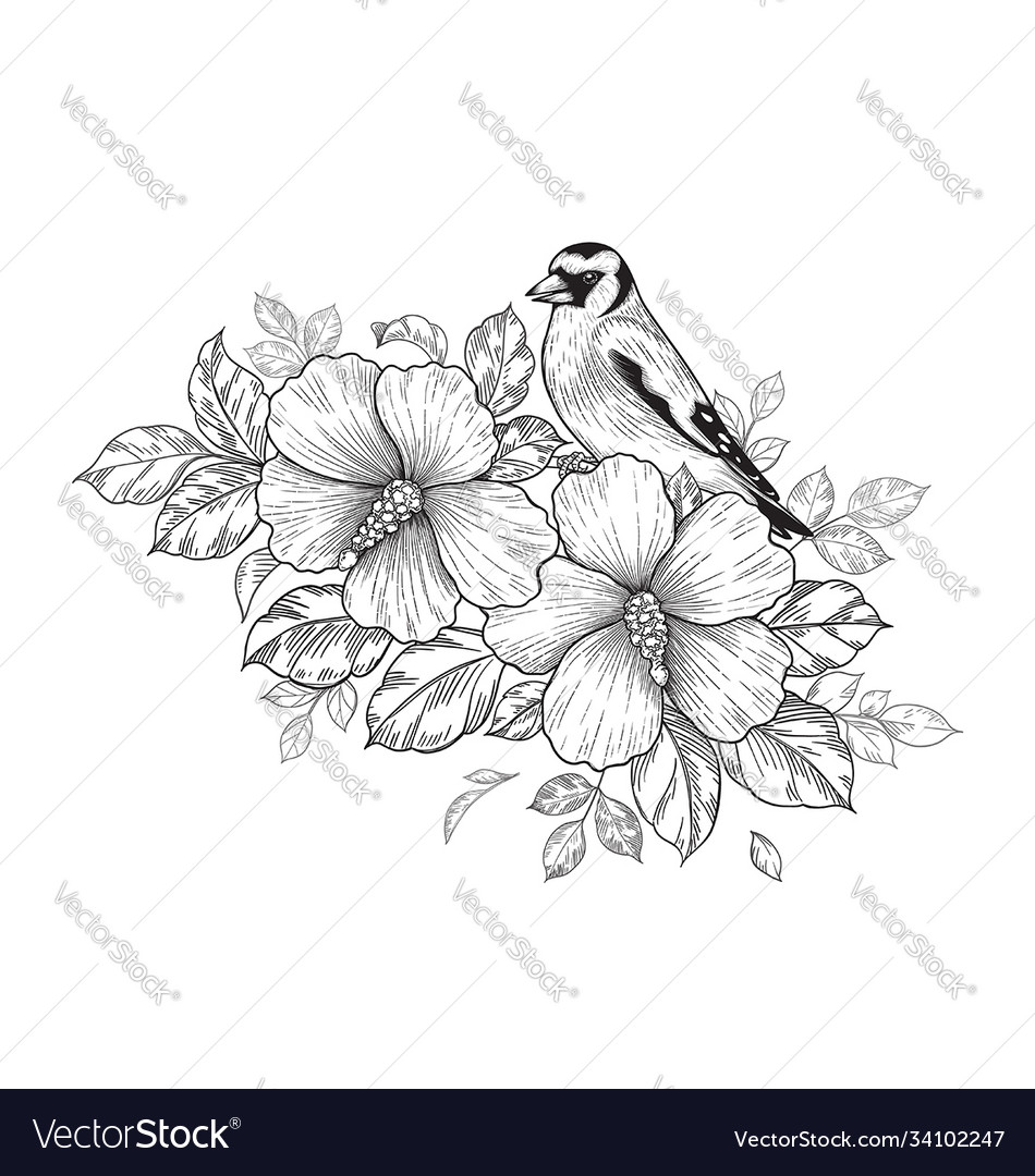 Hand drawn goldfinch sitting on hibiscus branch
