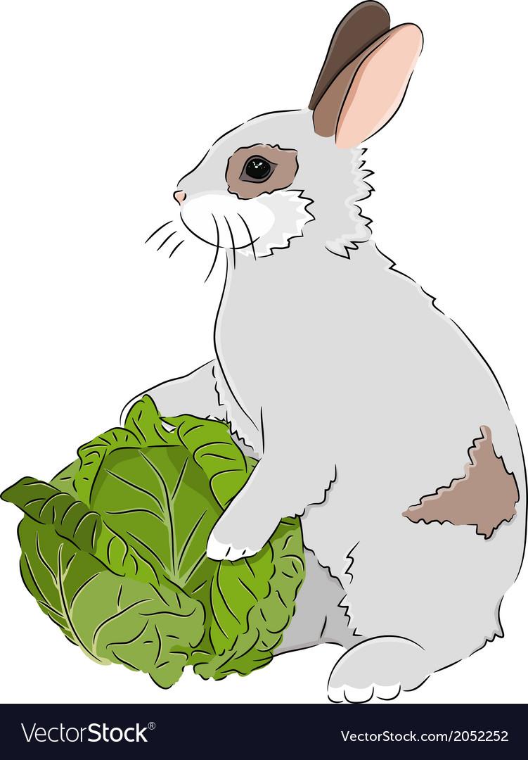 картинка кролик капусту есть начиная