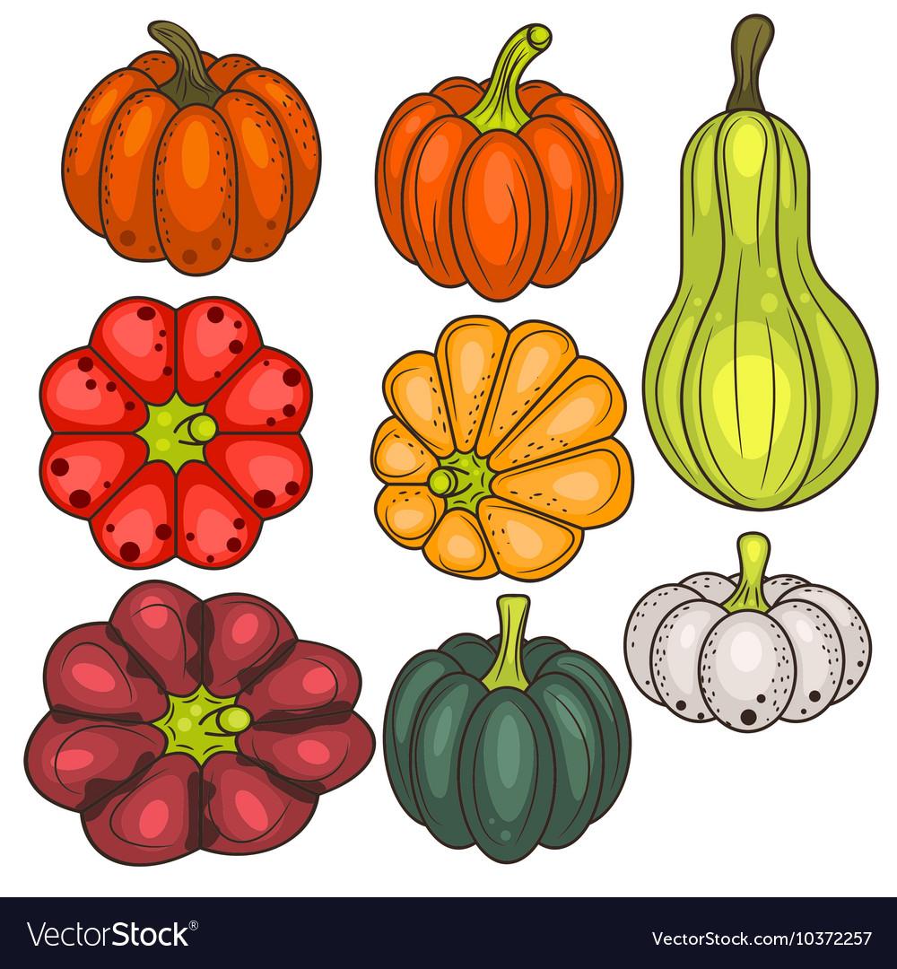 Set of pumpkin vegetable clip art vector image