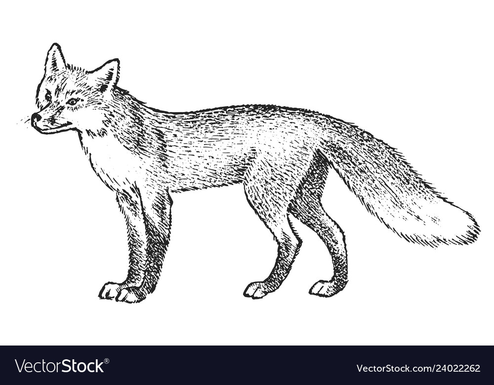 Red fox wild animal symbol of the north and the