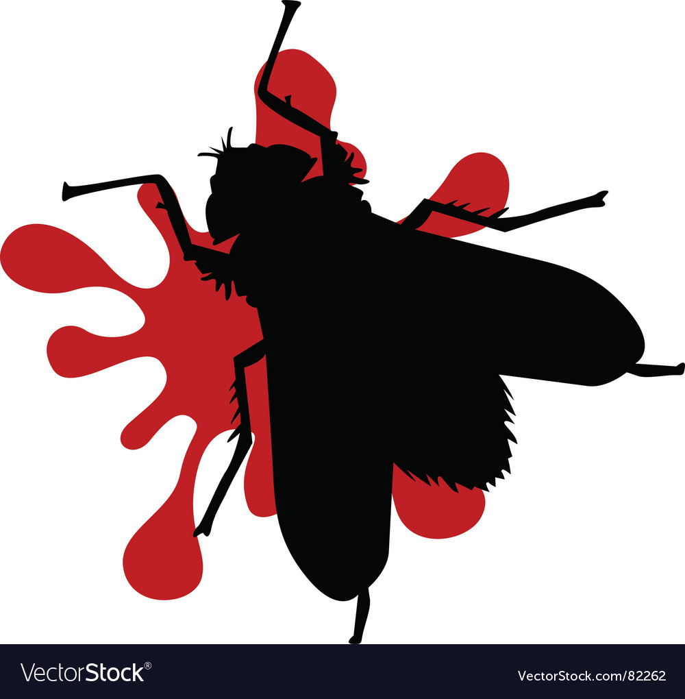 Squashed fly vector image