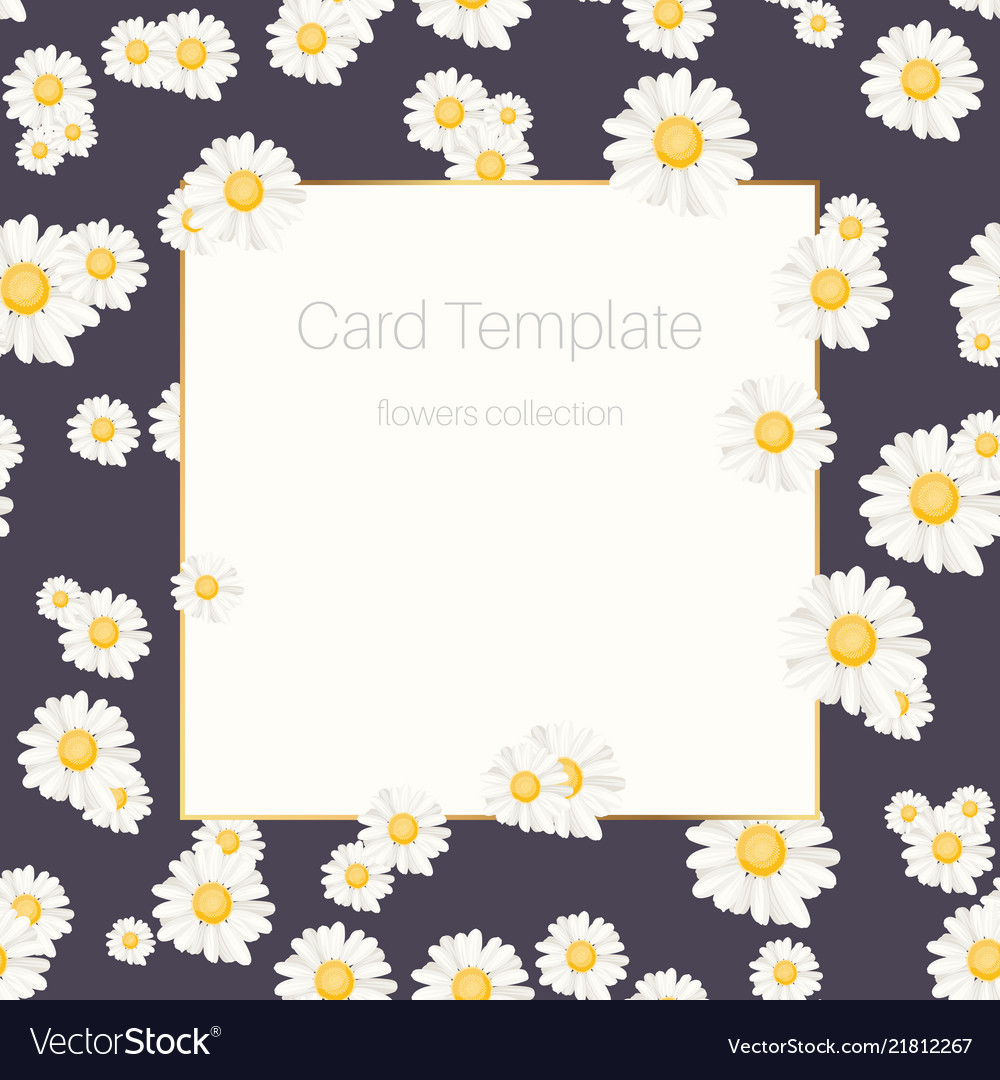 daisy chamomile floral card template royalty free vector