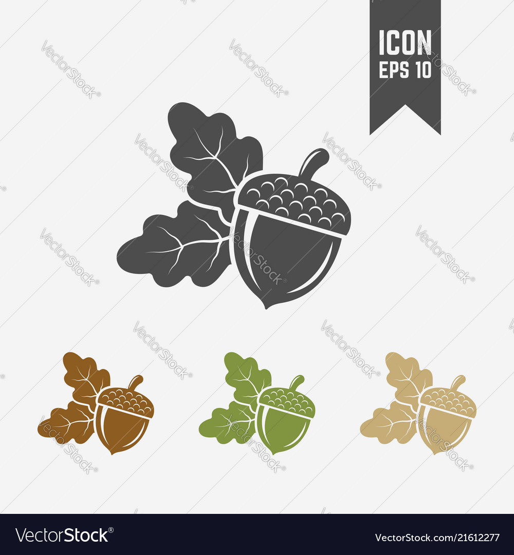 Acorn isolated icon