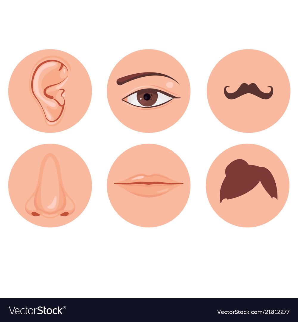 Human nose ear mouth mustache hair and eye set