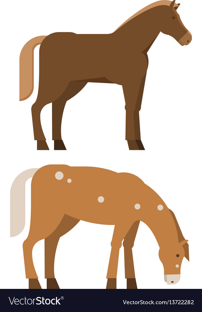 Chestnut horses in different poses