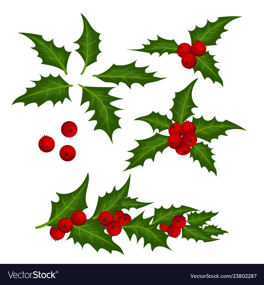 Christmas Leaves.Christmas Elements With Set Of Holly Leaves And