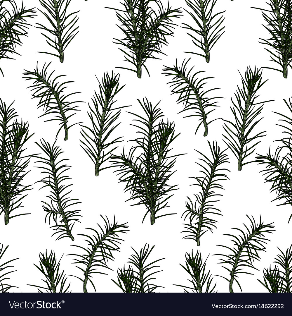 Seamless pattern with fir-tree branches