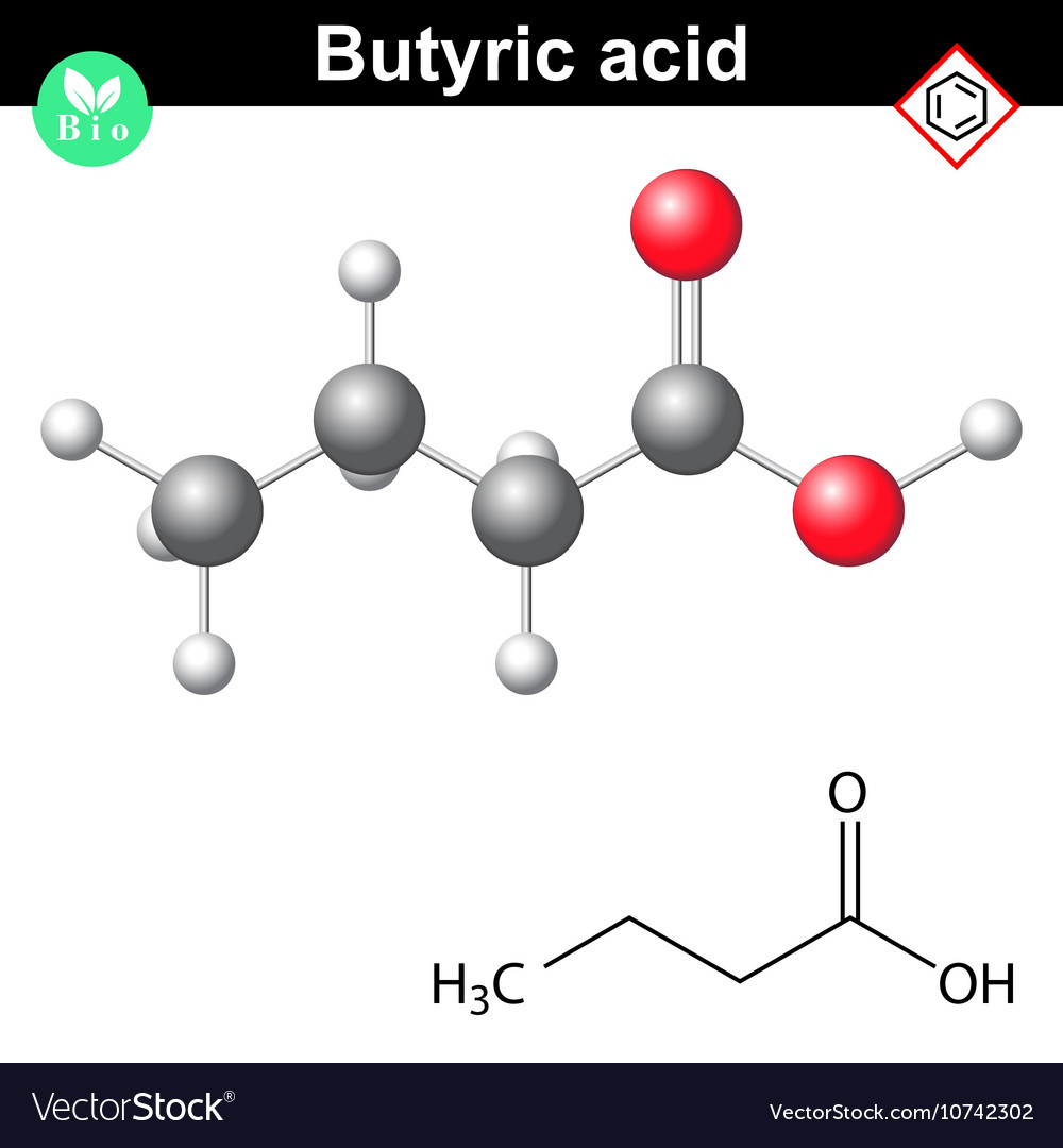 Butanoic acid molecule