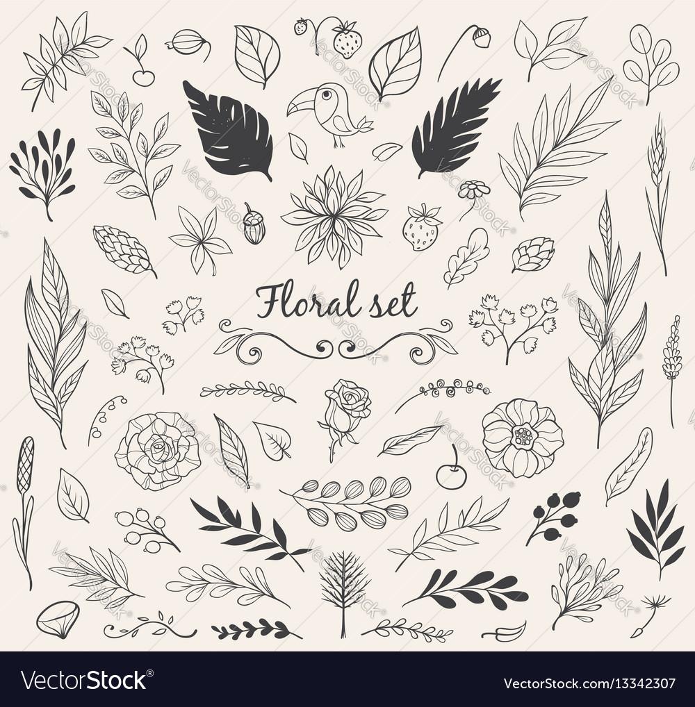 Set of nature doodles vector image