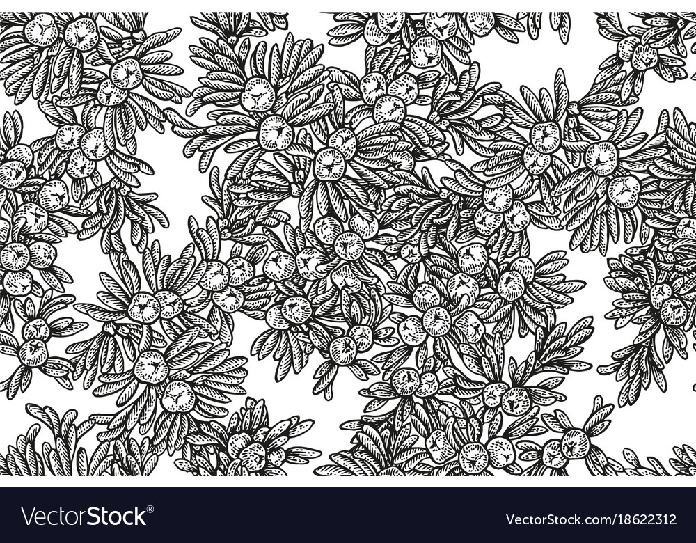 Juniper tree seamless pattern hand drawn