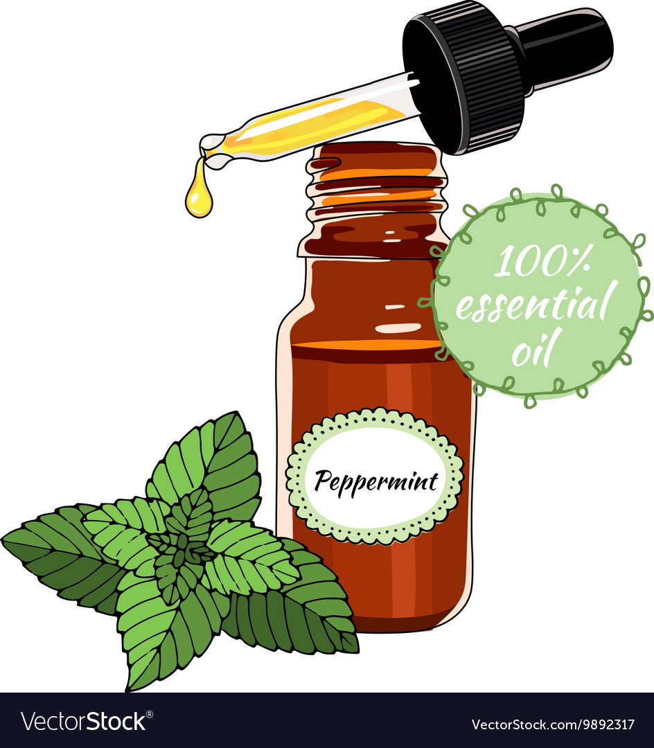 Bottle of Peppermint essential oil with dropper vector image