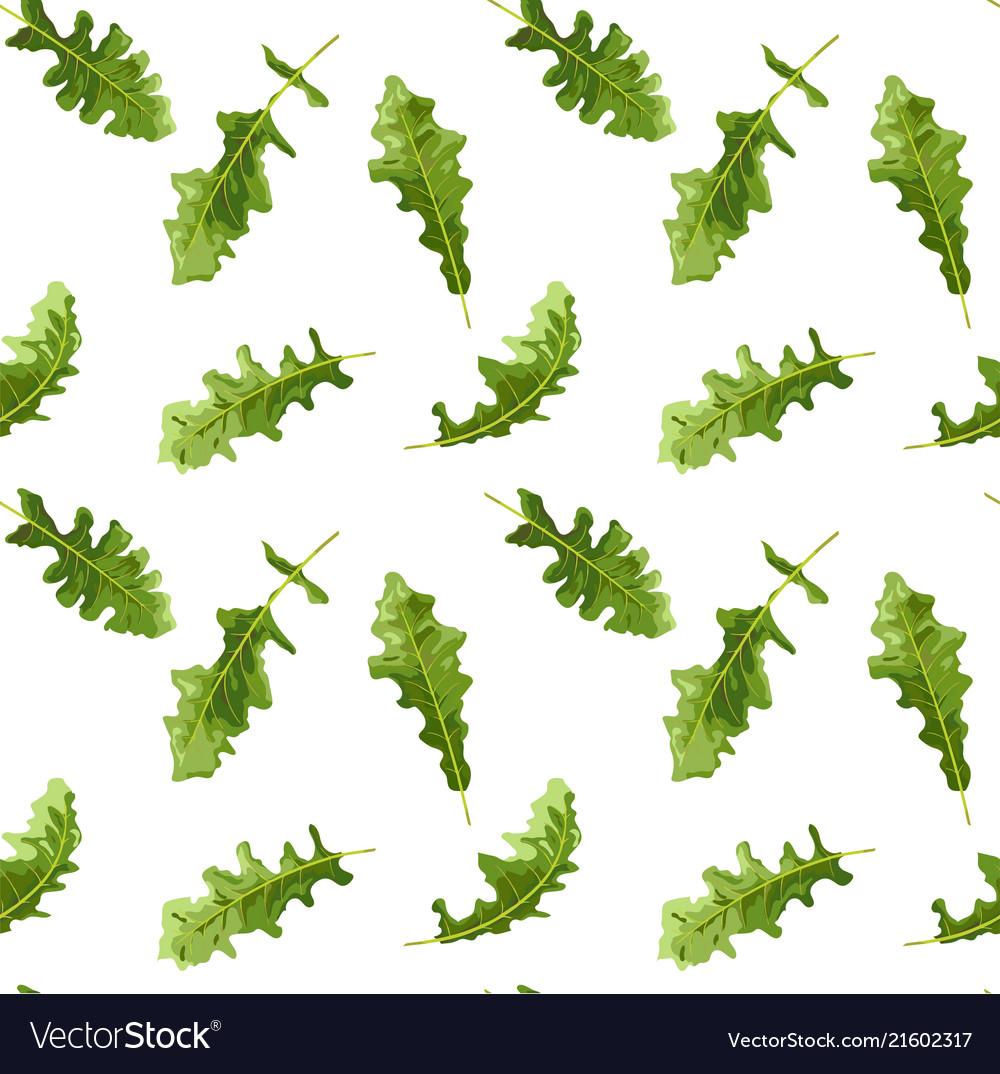 Green leaves of gerbera all