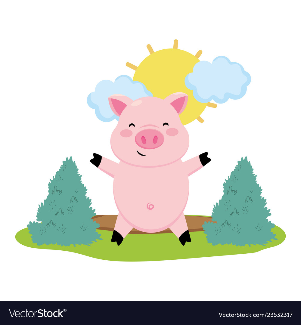 Pig in the farm