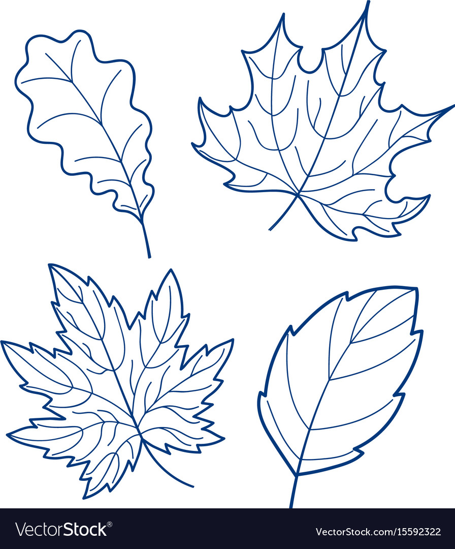 Four linear leaves