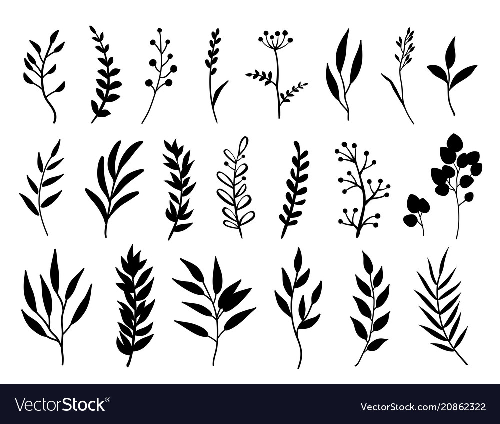 Set black branches and herbs