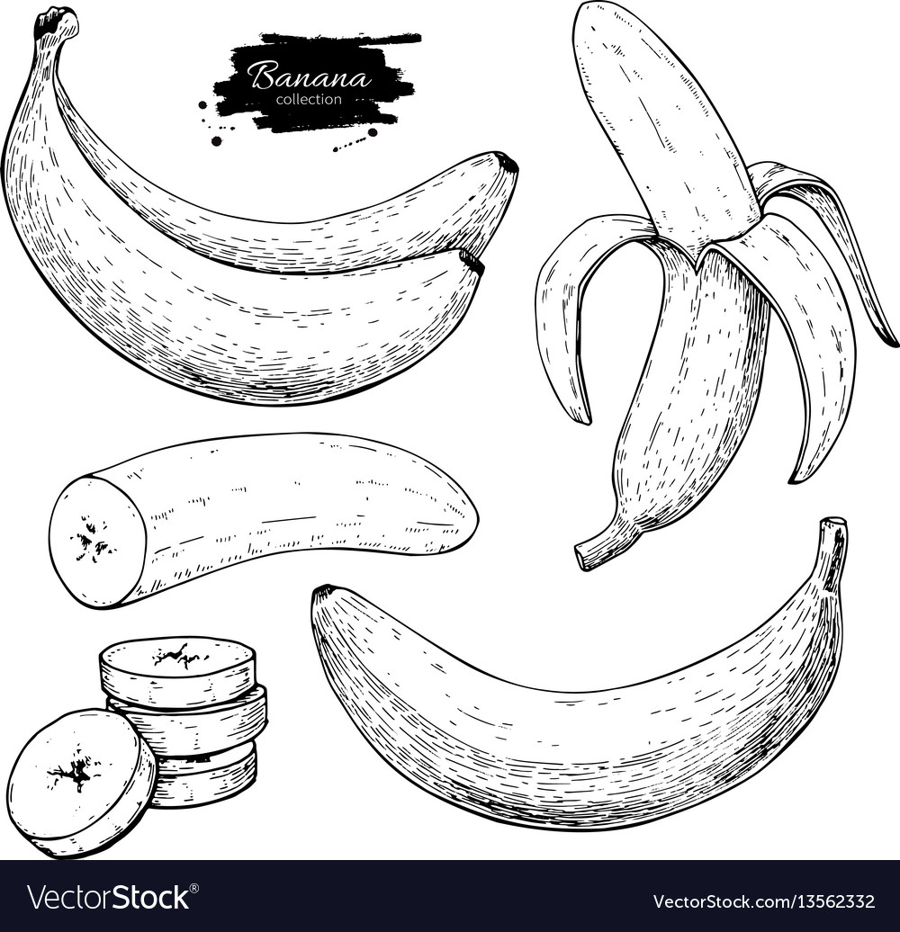 Banana set drawing isolated hand drawn