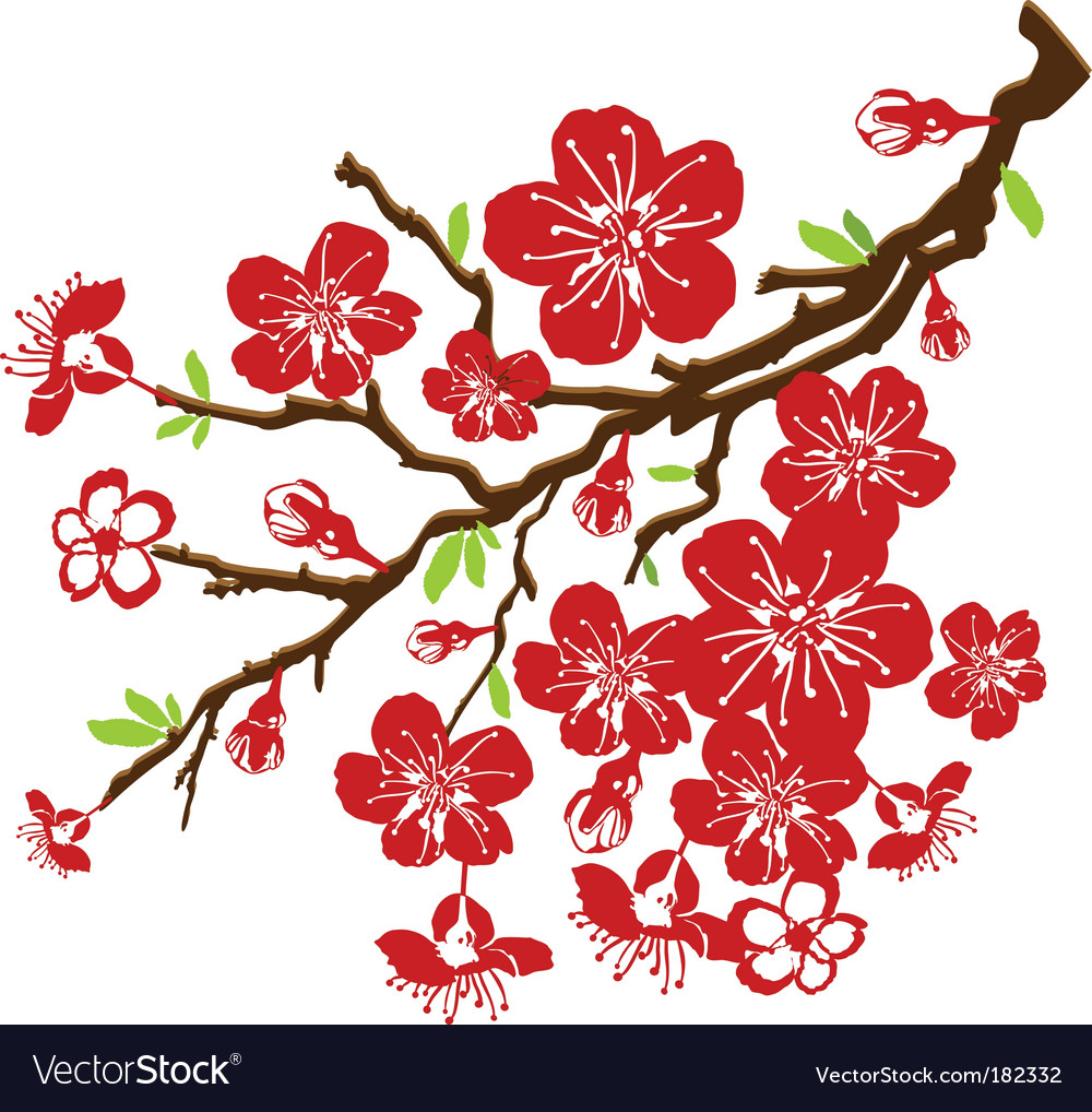 cherry blossoms royalty free vector image vectorstock rh vectorstock com Japanese Cherry Blossom Drawings Japan Cherry Blossom Clip Art