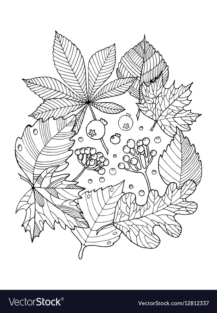Tree Leaves Coloring Book Royalty Free Vector Image
