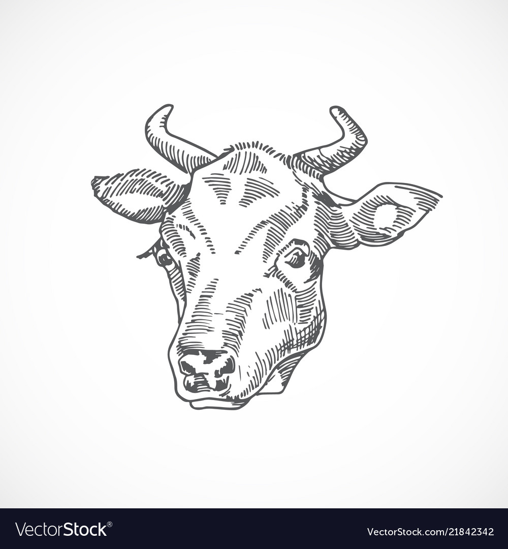 Cow face hand drawn abstract