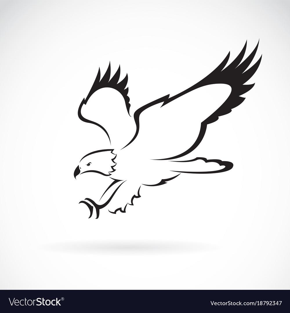 Eagle design on white background wild animals