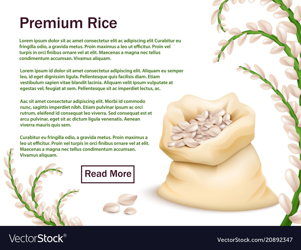 Realistic rice grains and ears