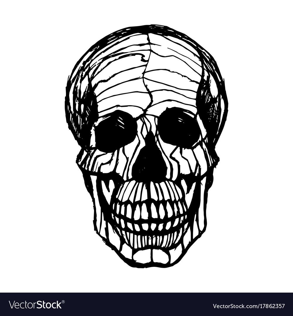 Detailed hand-drawn of skull grunge