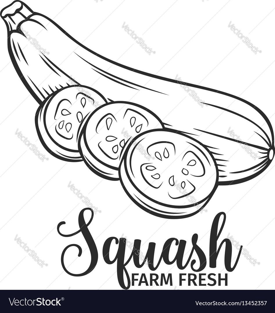 Hand drawn squash icon vector image