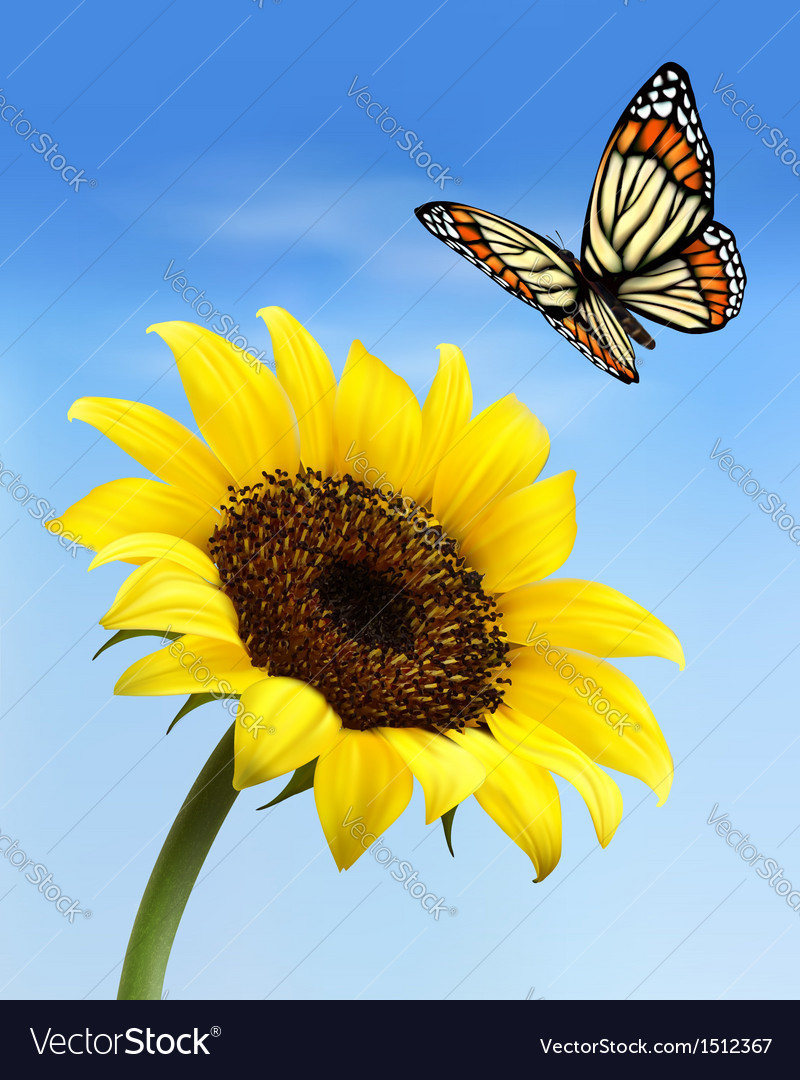 Nature background with sunflower and butterfly