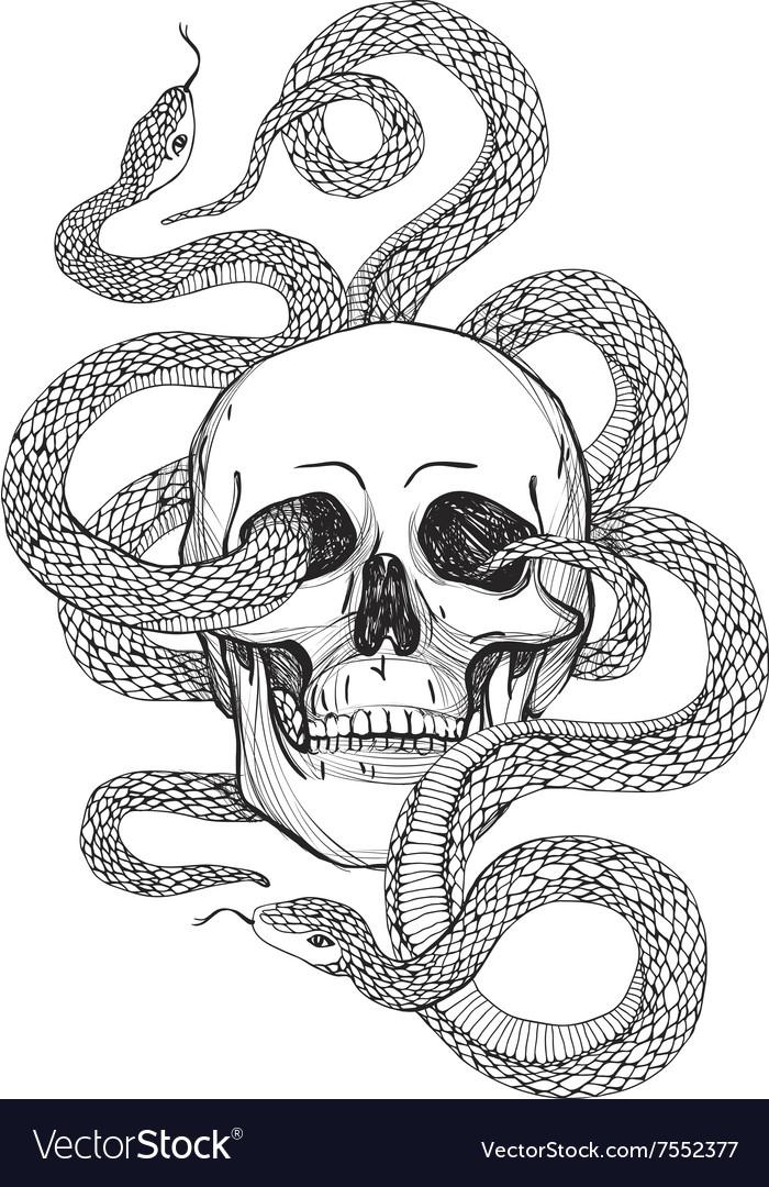 Skull and snake vintage
