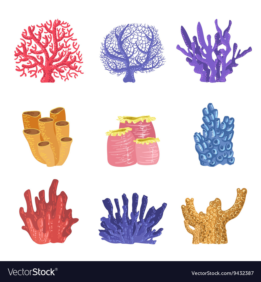 Different types of tropical reef coral collection vector image publicscrutiny Images