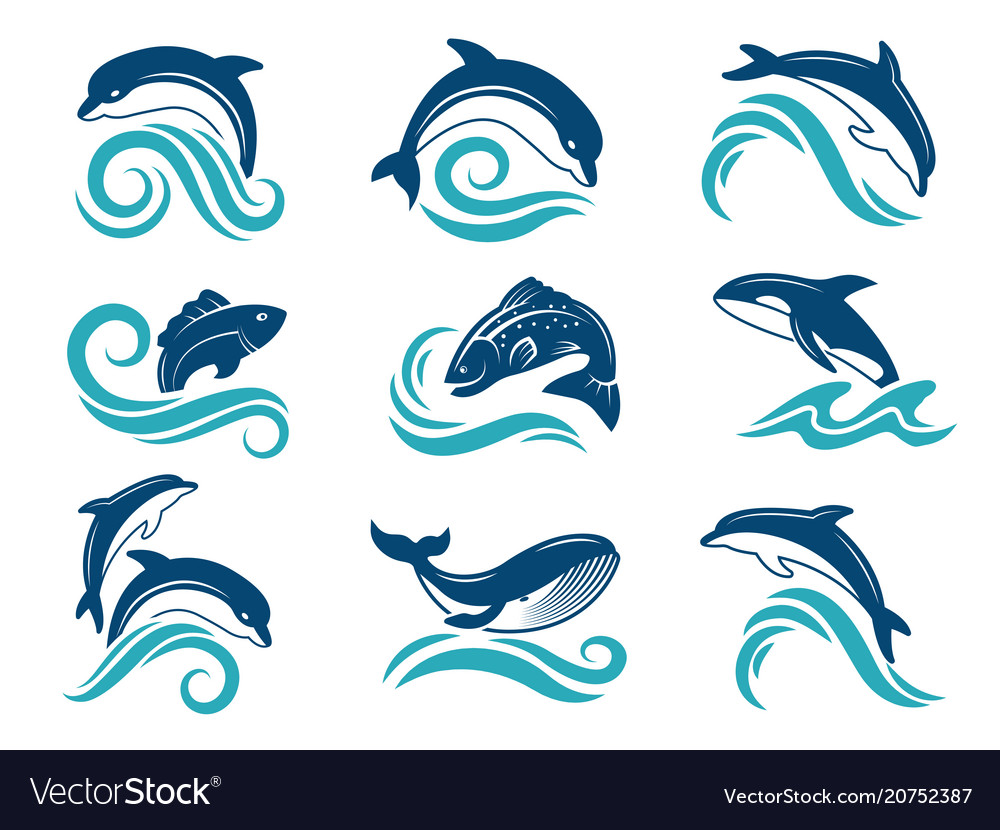 Pictures of dolphins and other marine animals vector image