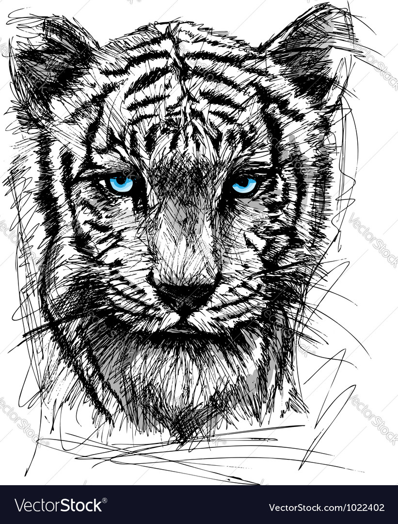 Hand draw sketch of white Tiger