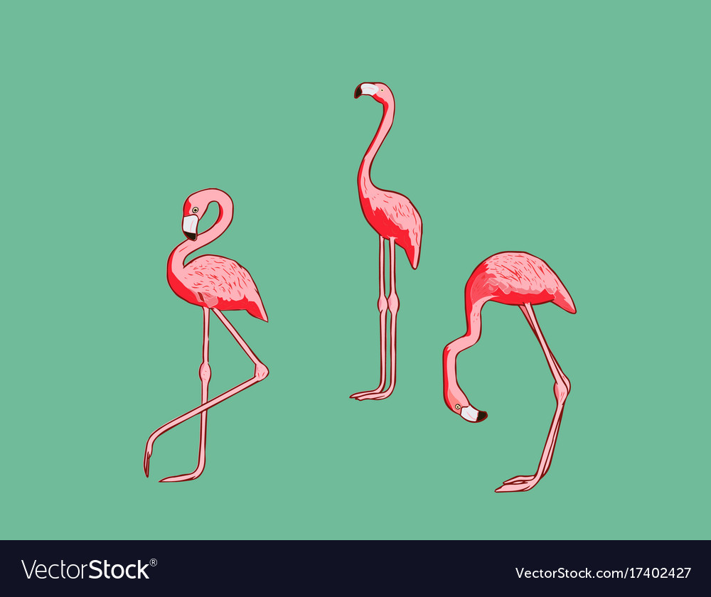 With flamingo vector image