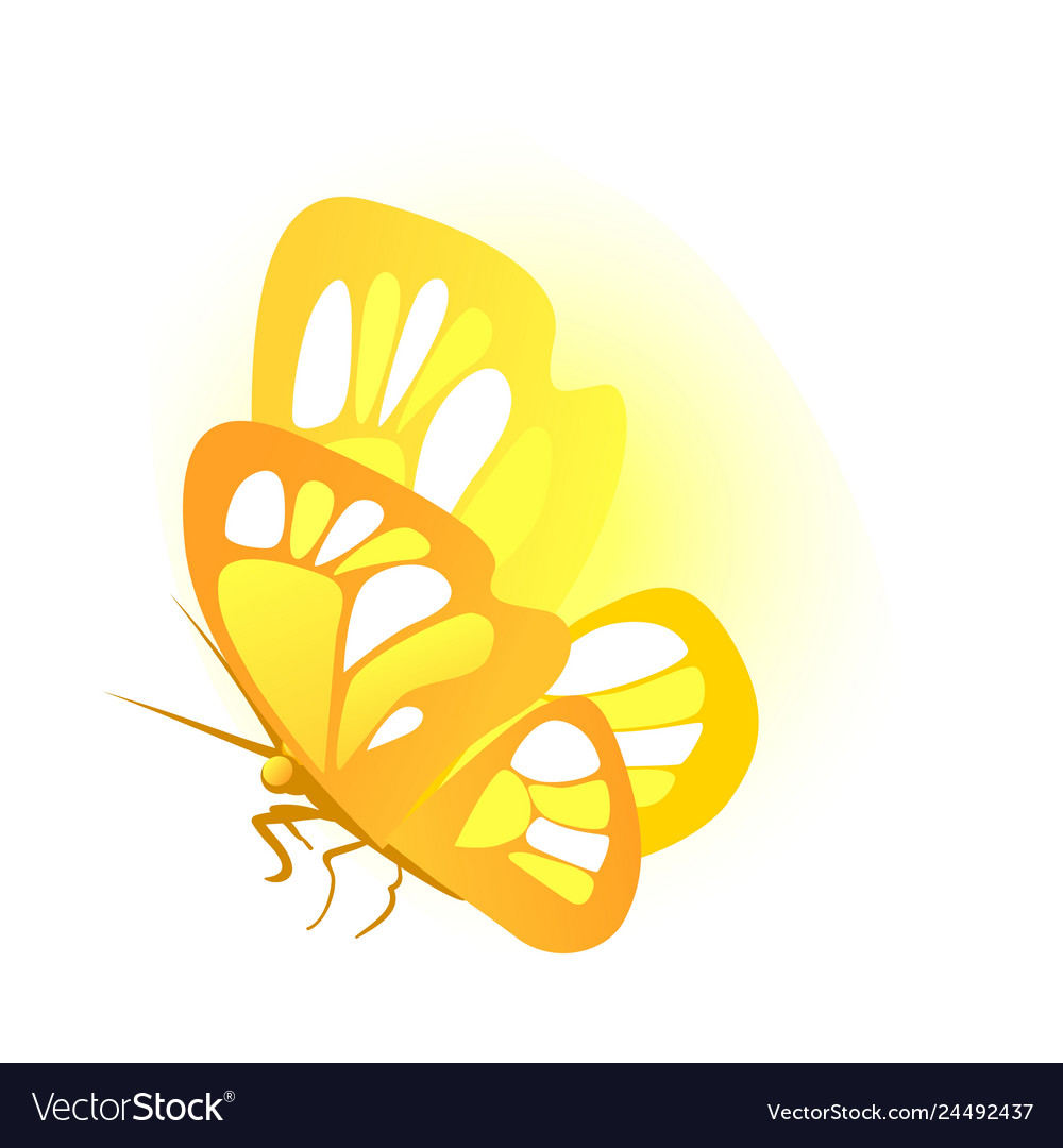 Butterfly with golden wings isolated on white