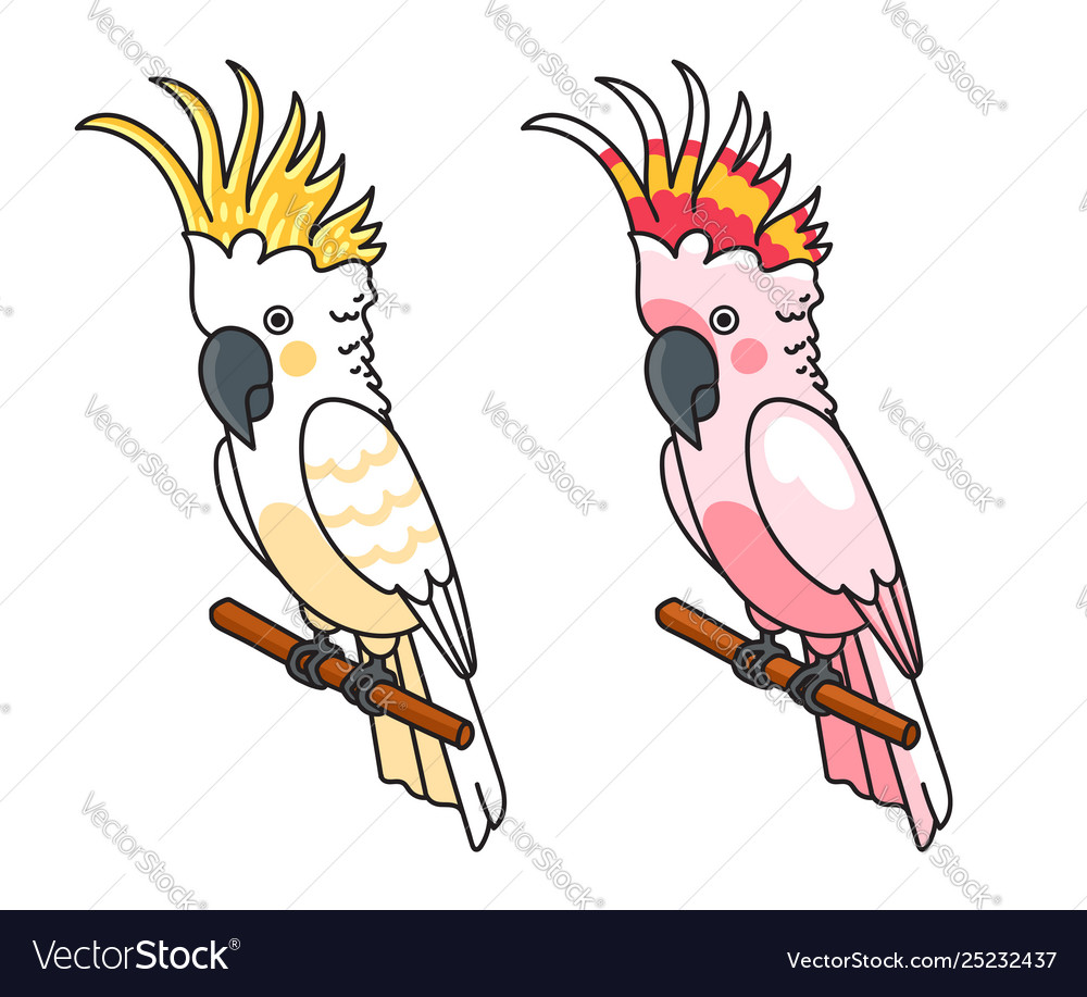 Yellow and pink cockatoos