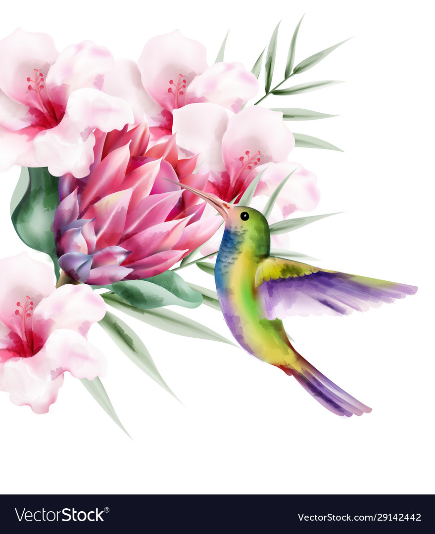 Watercolor tropical paradise bird with colorful