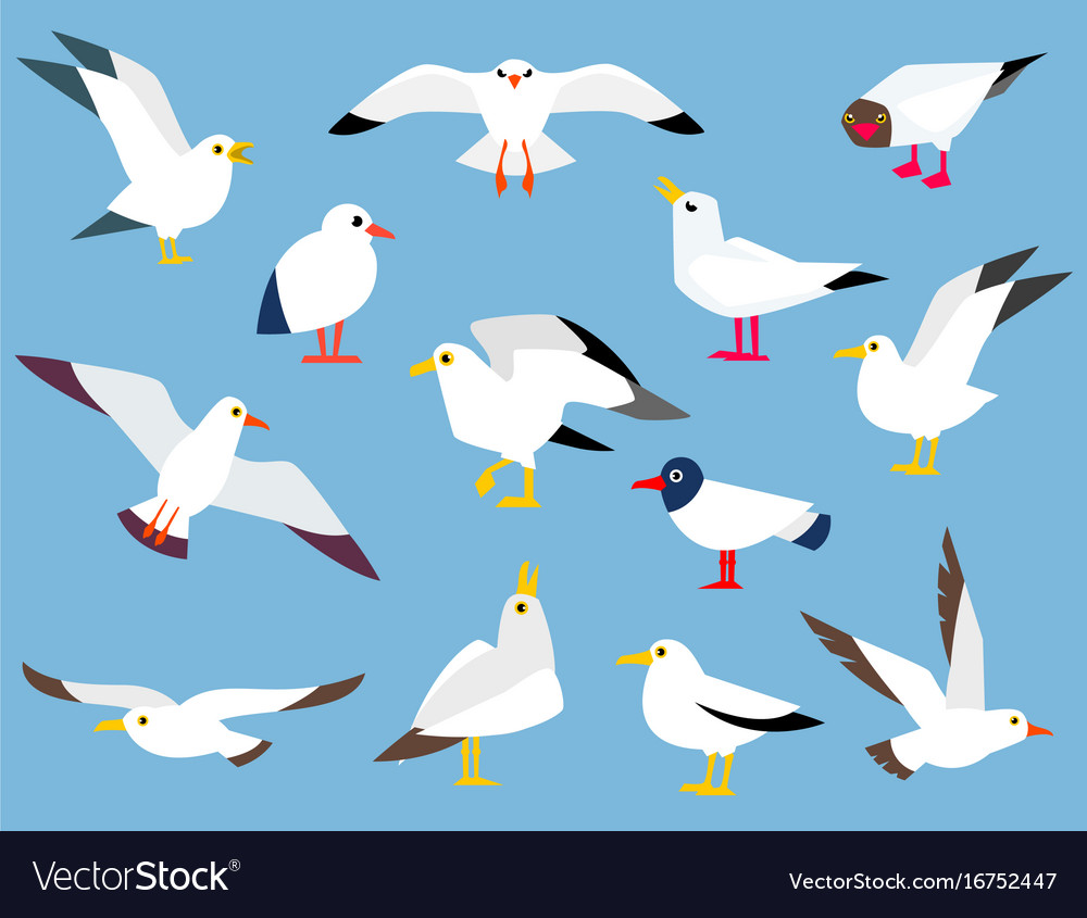 Cartoon atlantic seabird