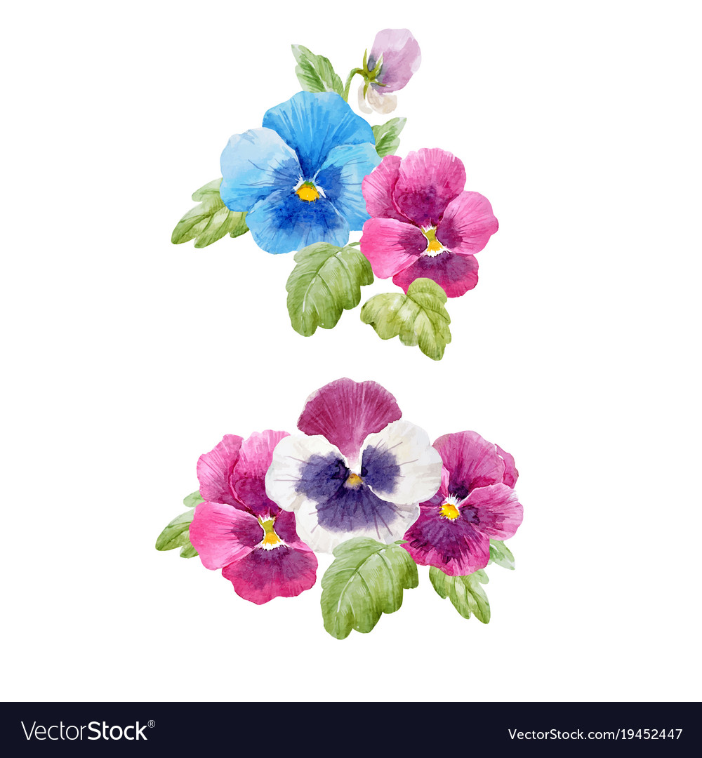 Watercolor Pansy Flower Set Royalty Free Vector Image