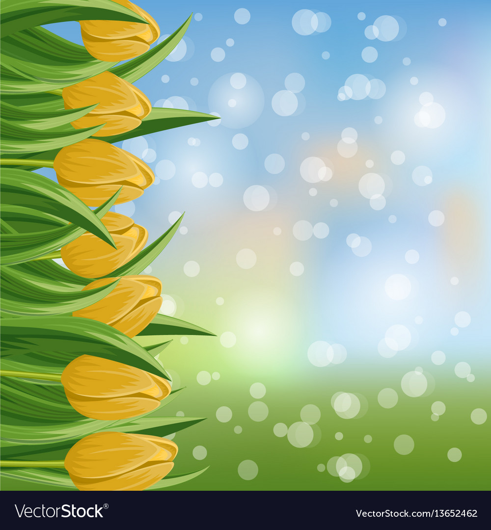 Spring banner with yellow blooming tulip vector image