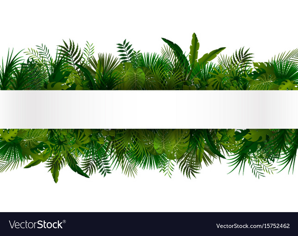 Tropical foliage floral design background vector image